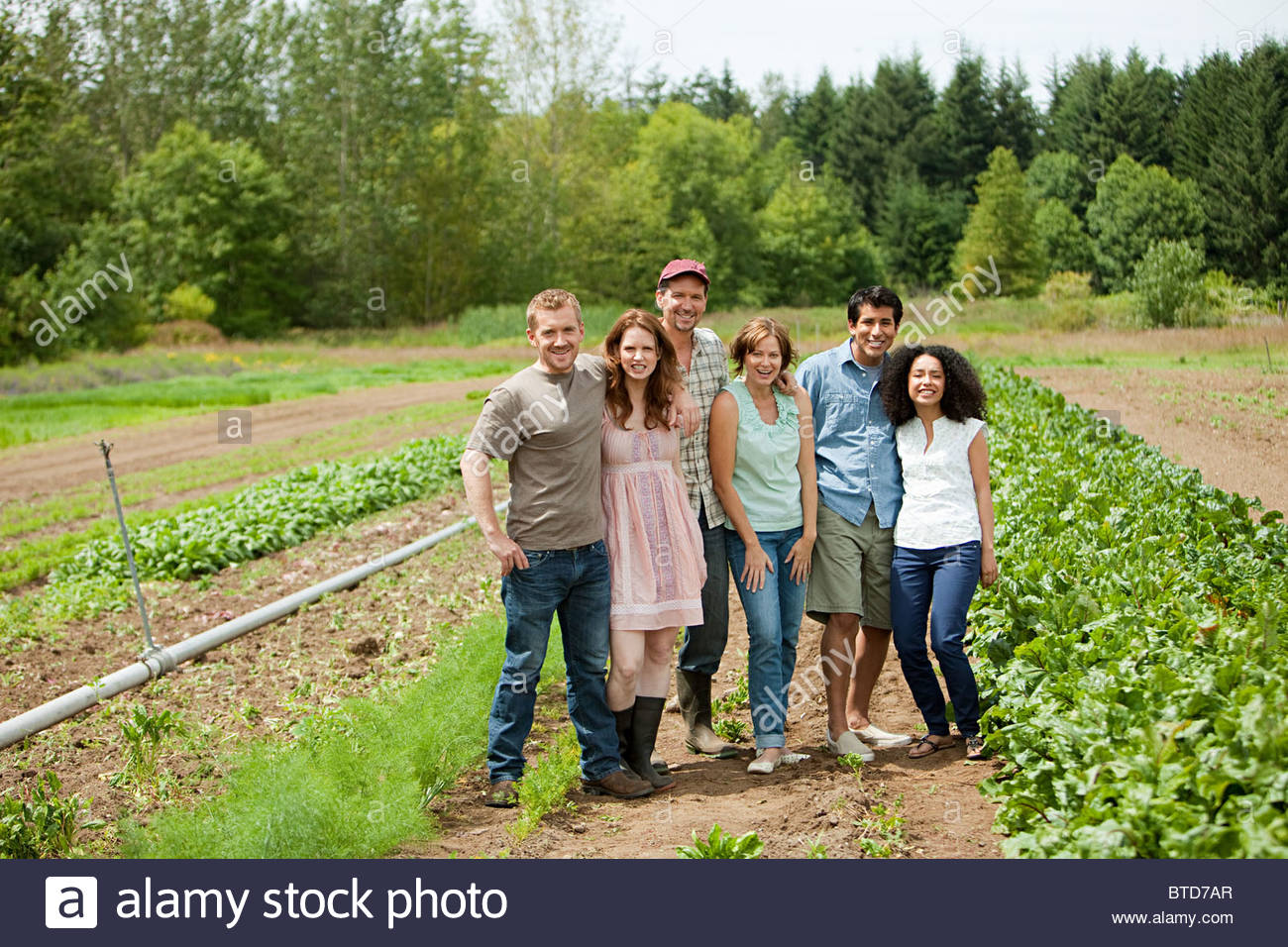 Group of people in vegetable field on farm - Stock Image