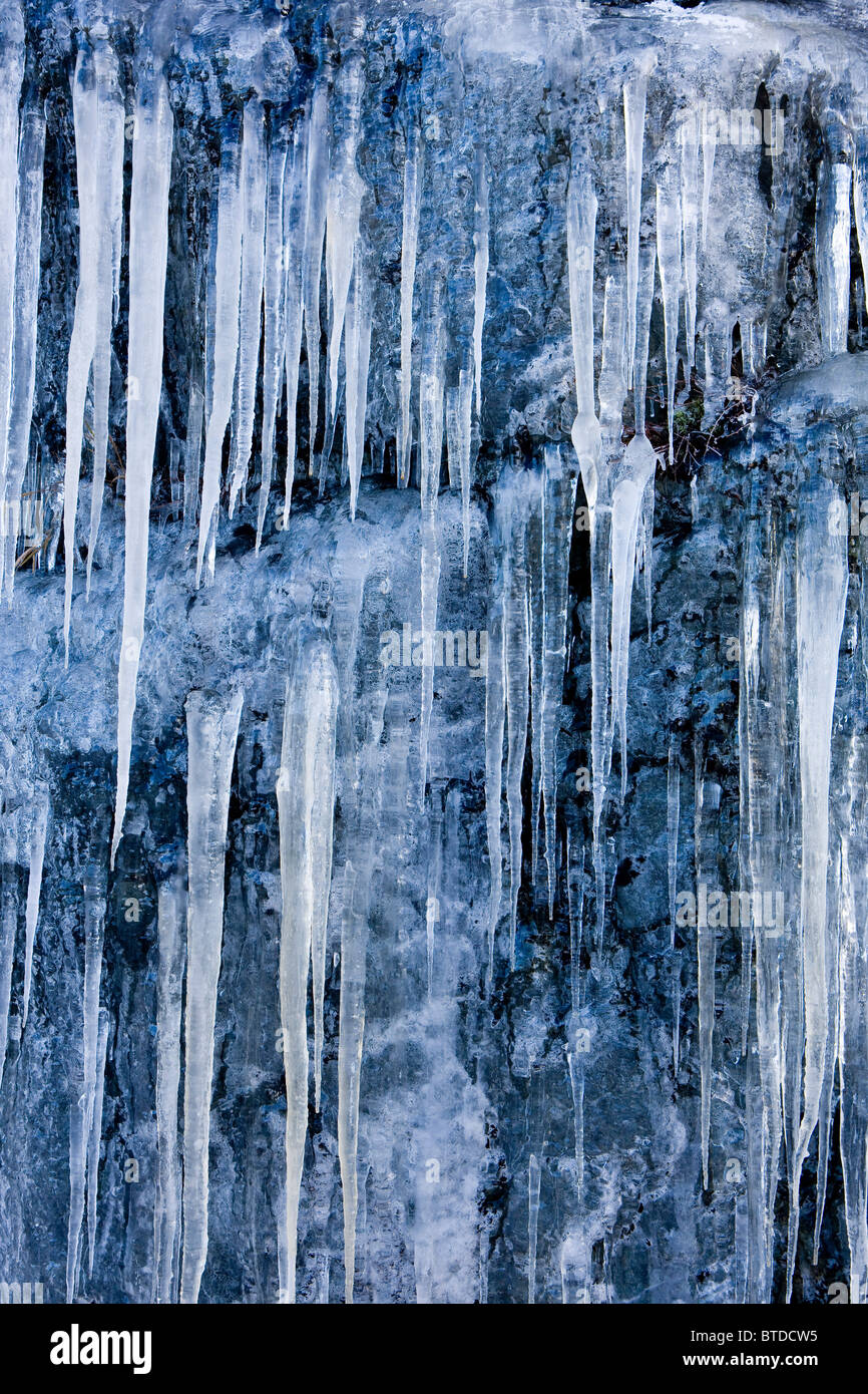 Icicles formed from groundwater seepage hang from a rock ledge, Tongass Forest, Juneau, Southeast Alaska - Stock Image