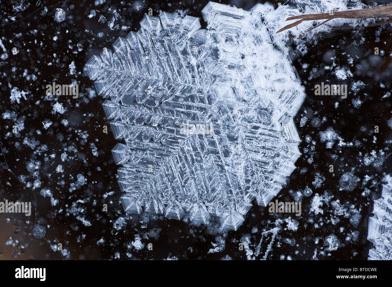 Close up of ice feather formations on Knob Lake near Sheep Mountain, Southcentral Alaska, Winter, Extended Depth - Stock Image