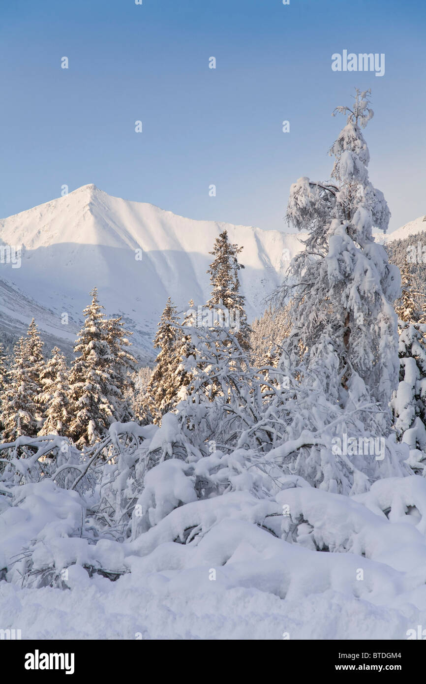 Winter scenic of snowcovered Spruce trees and the Chugach Mountains near Girdwood in Southcentral Alaska - Stock Image