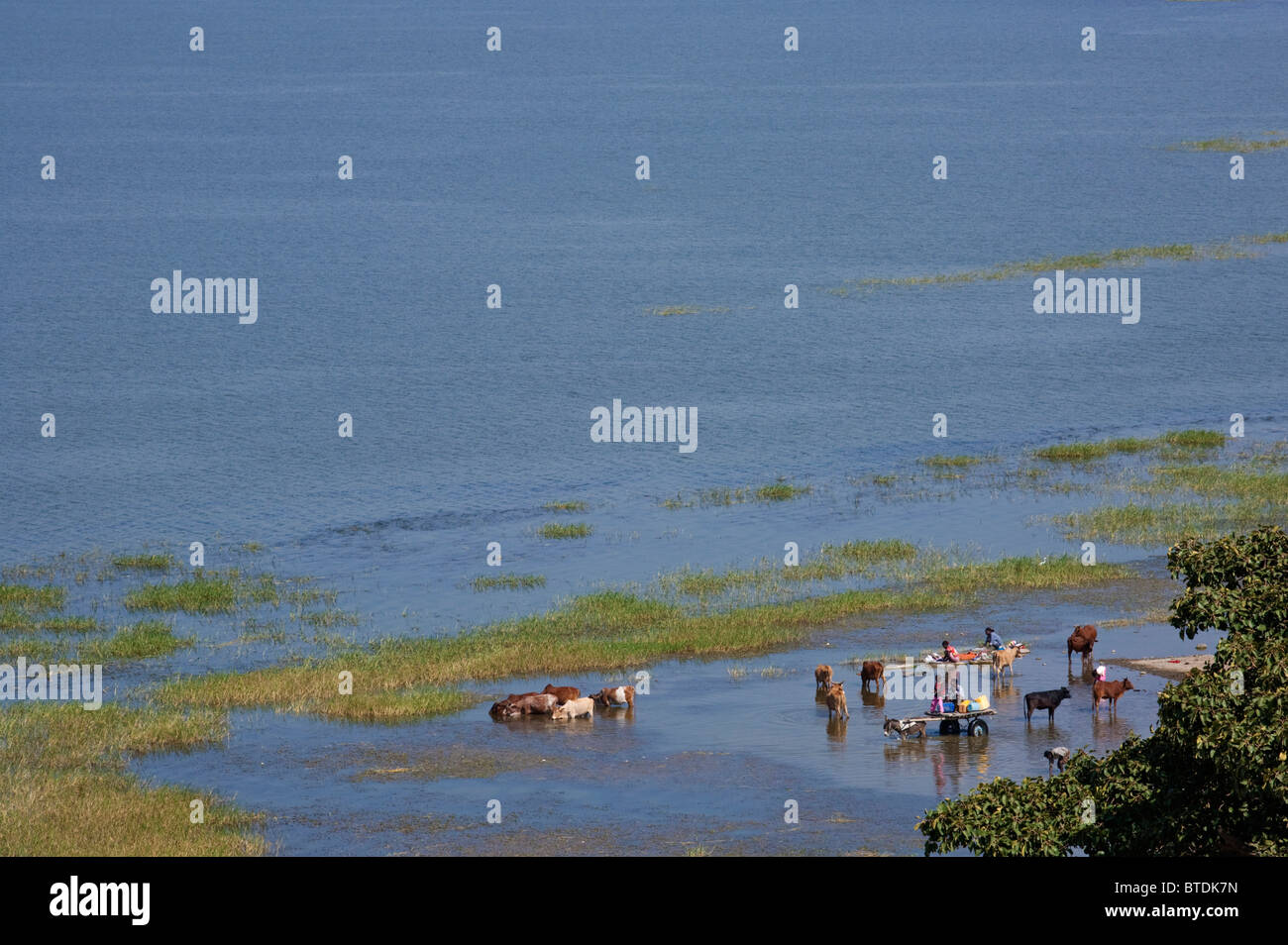Locals watering cattle in the shallows of Lake Awassa Stock Photo