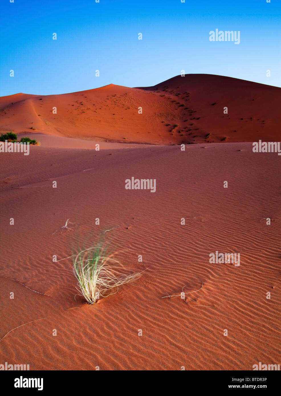Blades of grass blowing in the breeze in the Sahara desert - Stock Image