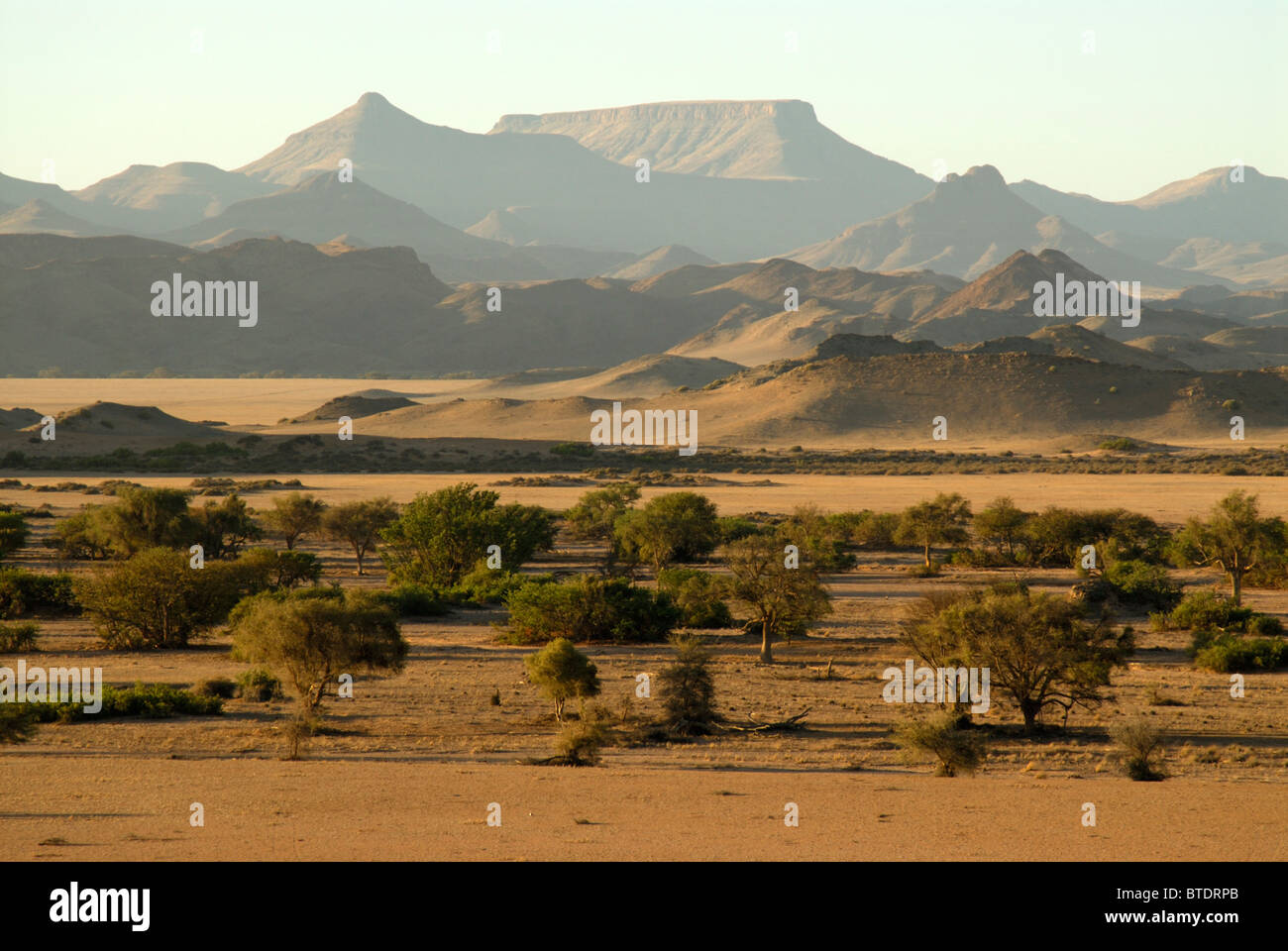 Scenic view of Ana trees (Feidherbia albida) in Huab River Valley and mountains in the background - Stock Image