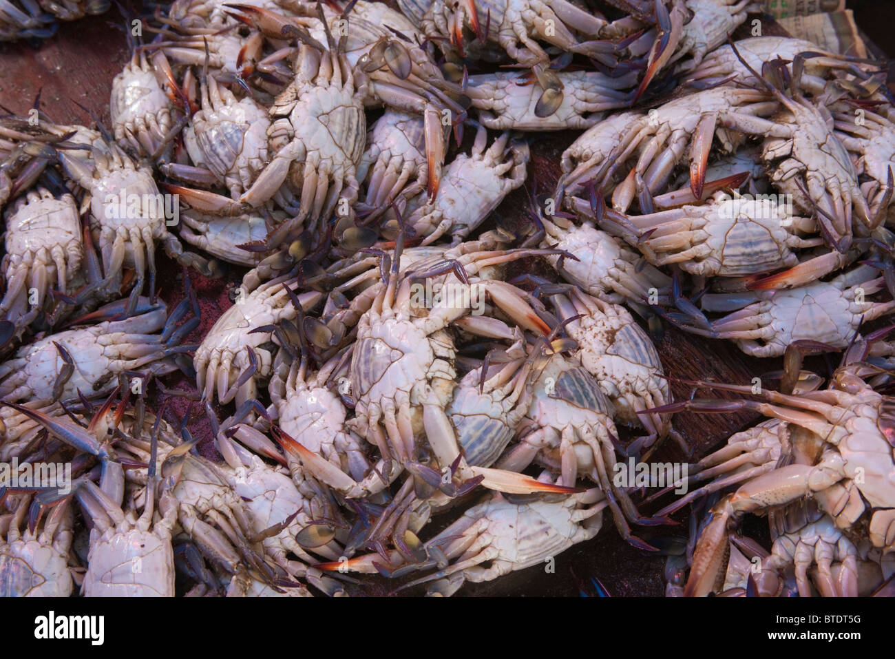 Crabs in buckets for sale at a fish market - Stock Image