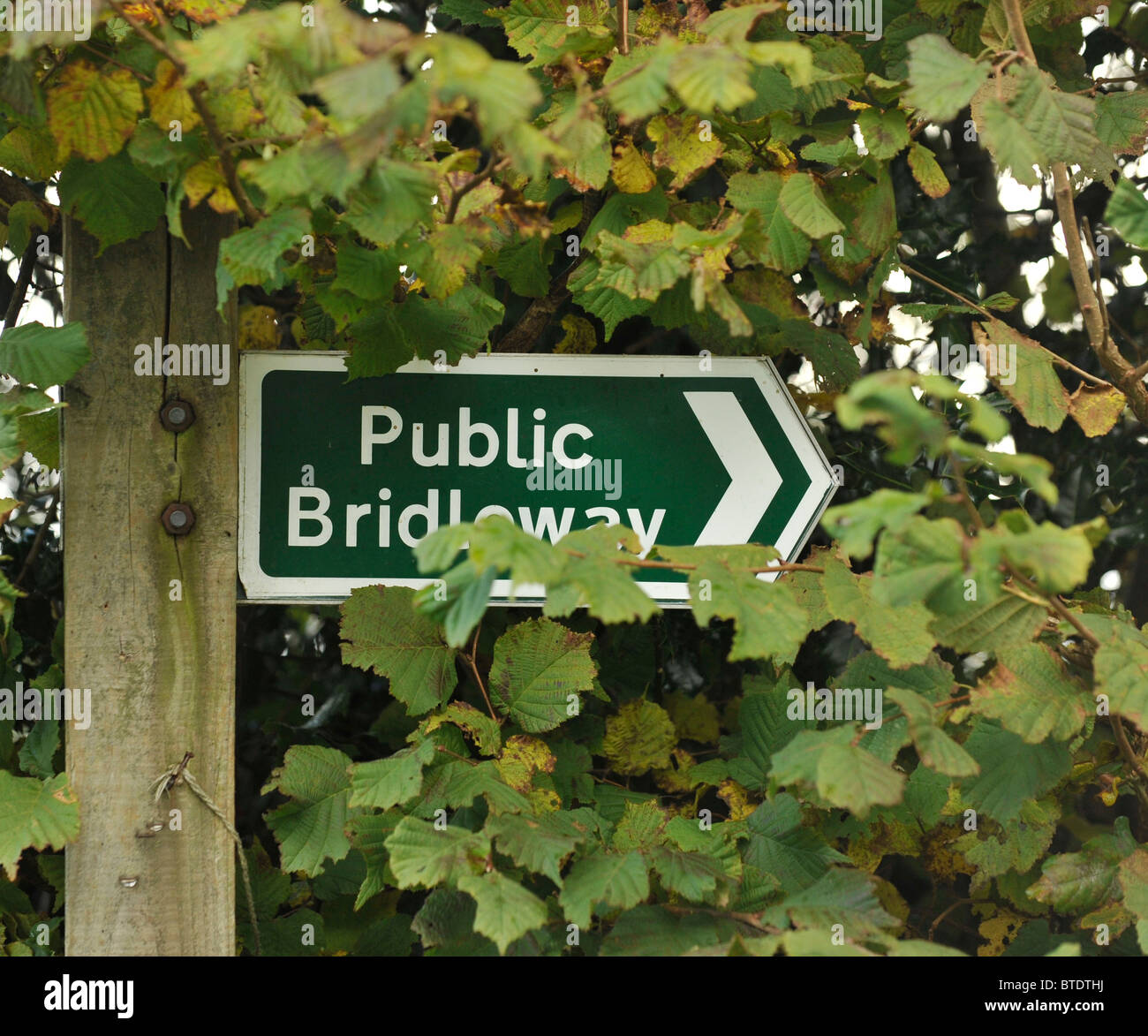 public bridleway sign hidden in foliage - Stock Image