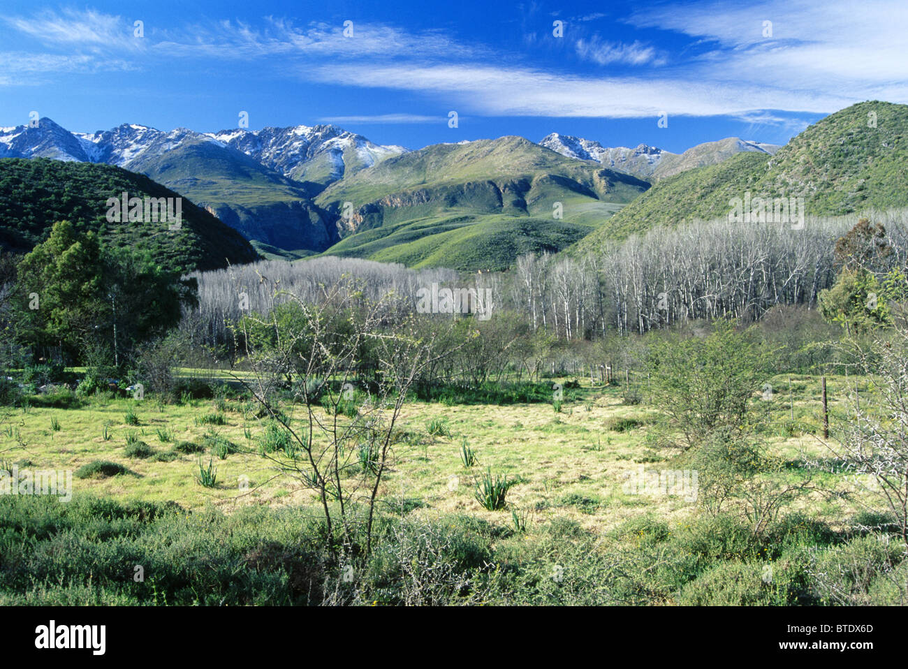 Klein Karoo pastures with leafless poplar trees and grassy foothills and snow-covered Outeniqua peaks in the distance - Stock Image