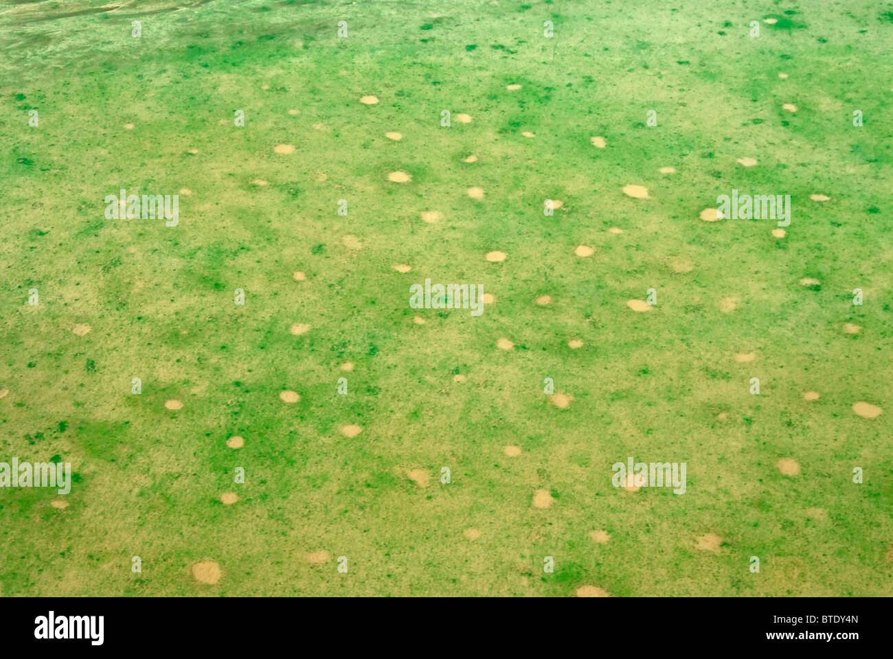 Aerial scenic view of fairy circles and green flush from recent rains - Stock Image