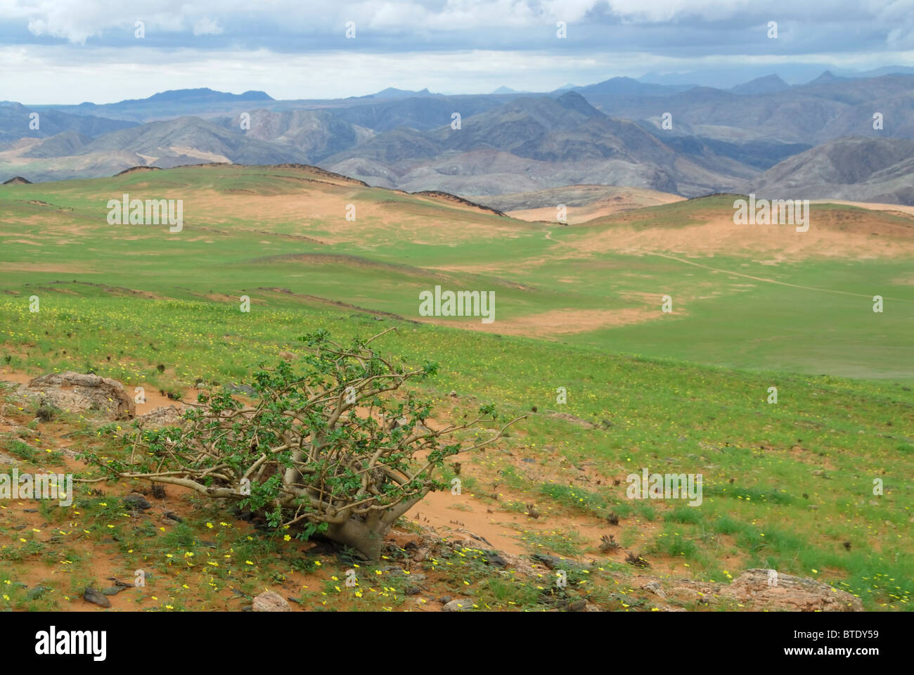 Scenic view of looking down into Kunene River Valley and Serra Cafema mountains, showing green flush from recent - Stock Image