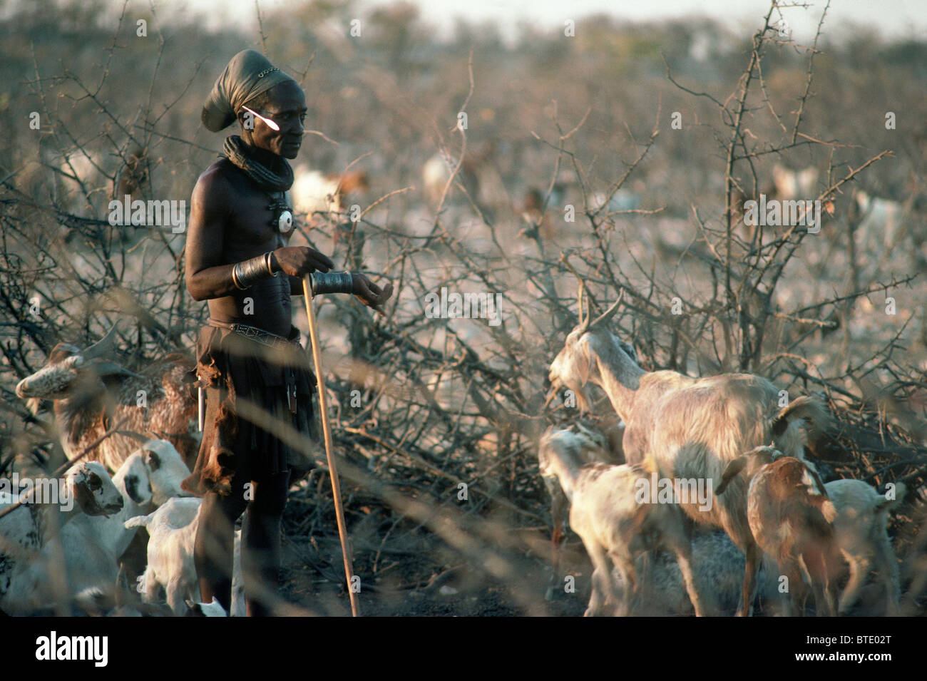 Himba man tending goats in their kraal - Stock Image