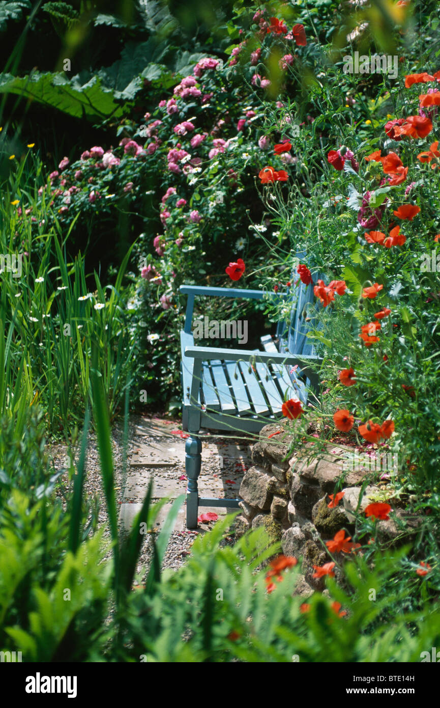 Blue Painted Wooden Bench Against Red Climbing Rose On Small Paved Stock Photo Alamy