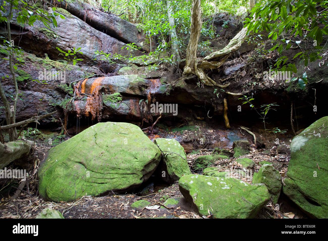 Rocky rainforest gully, Royal National Park, Sydney, Australia - Stock Image