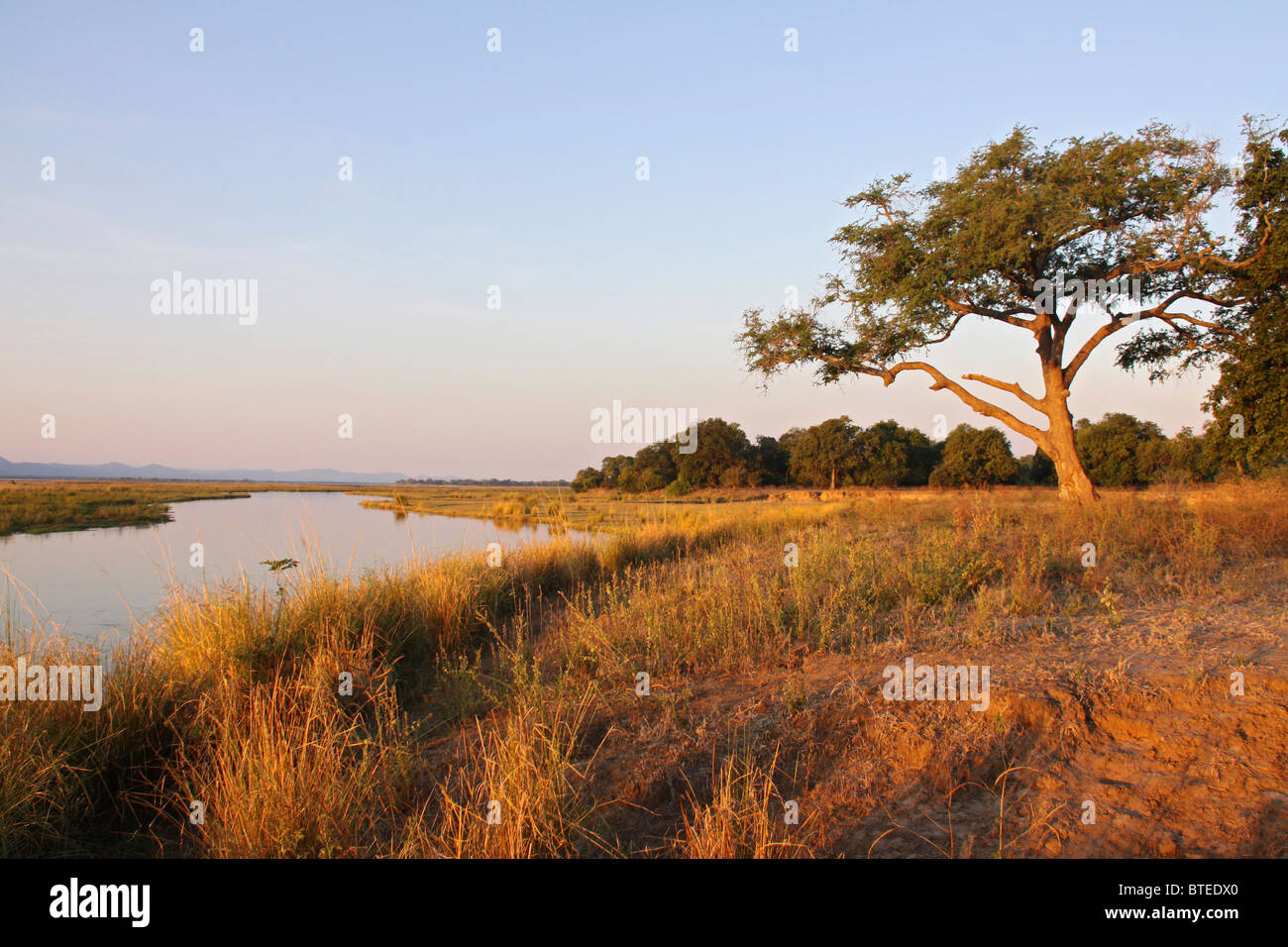 Zambezi River banks with long dry grass and water in the background - Stock Image