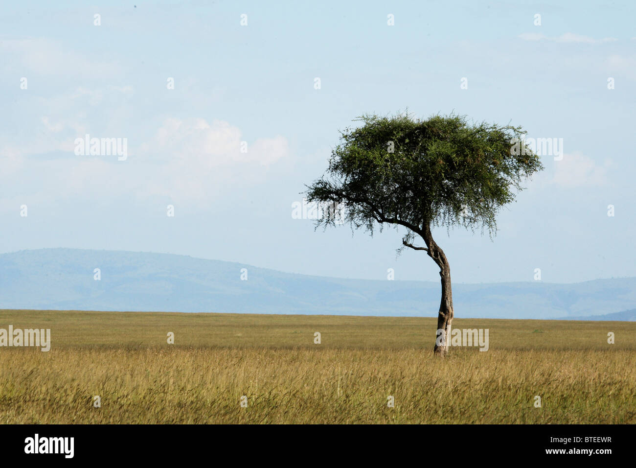 Scenic view of  a vast grassland with a lone tree and mountains in the very distance - Stock Image