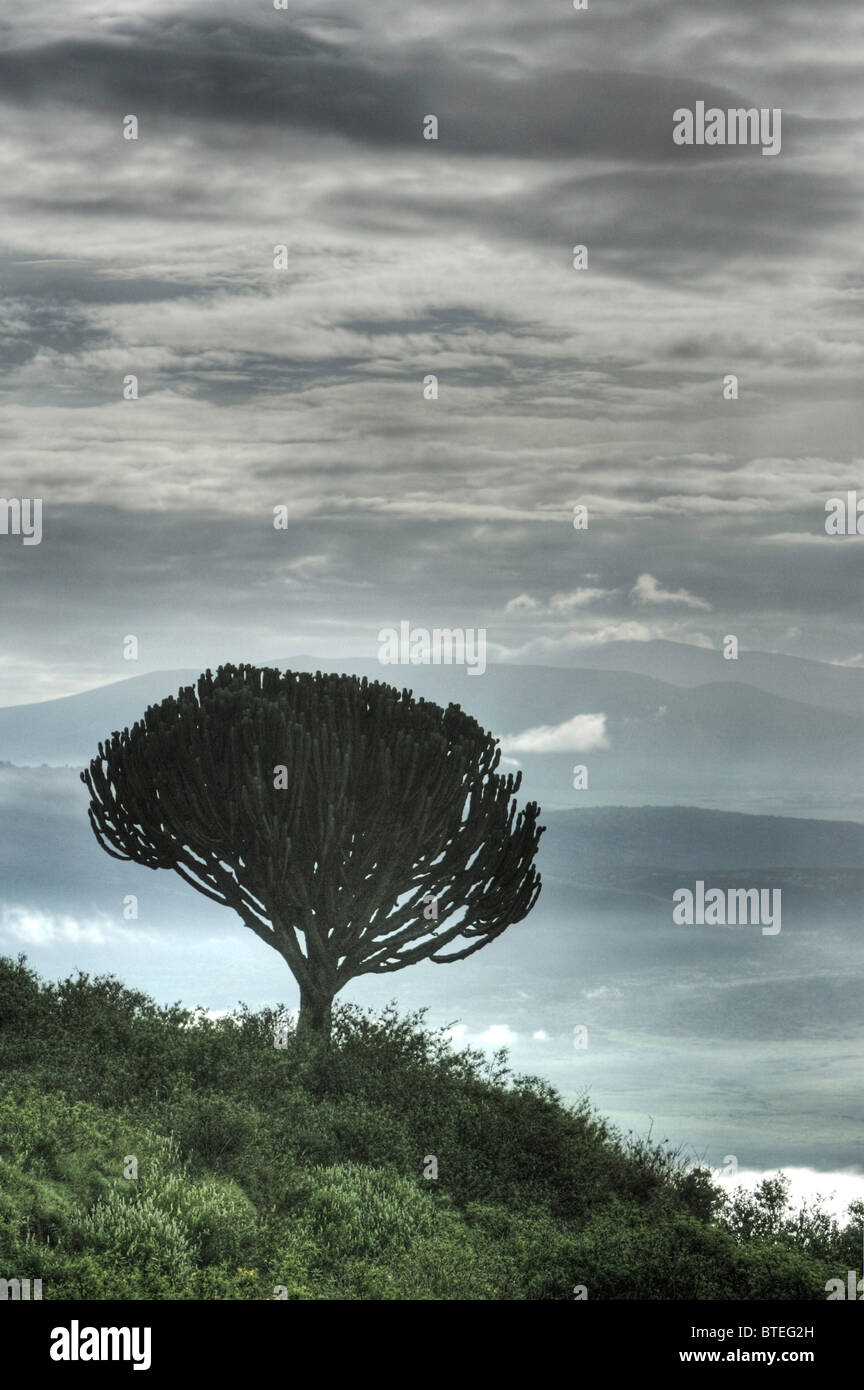 Trees, dark clouds and  early morning mist on entry into the crater - Stock Image