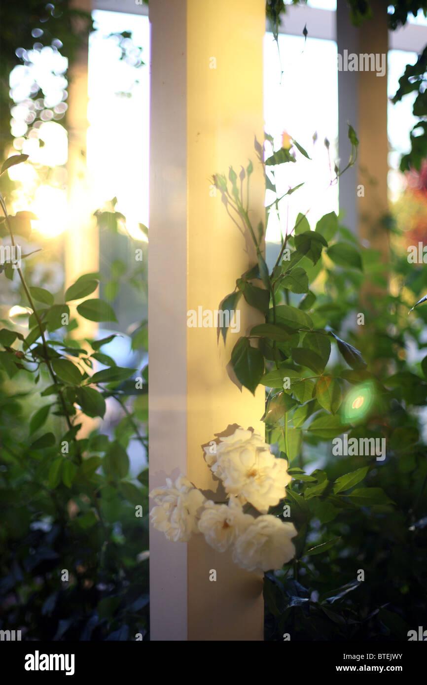 Unique white flowers homewood al picture collection wedding and white flowers homewood al images flower decoration ideas mightylinksfo