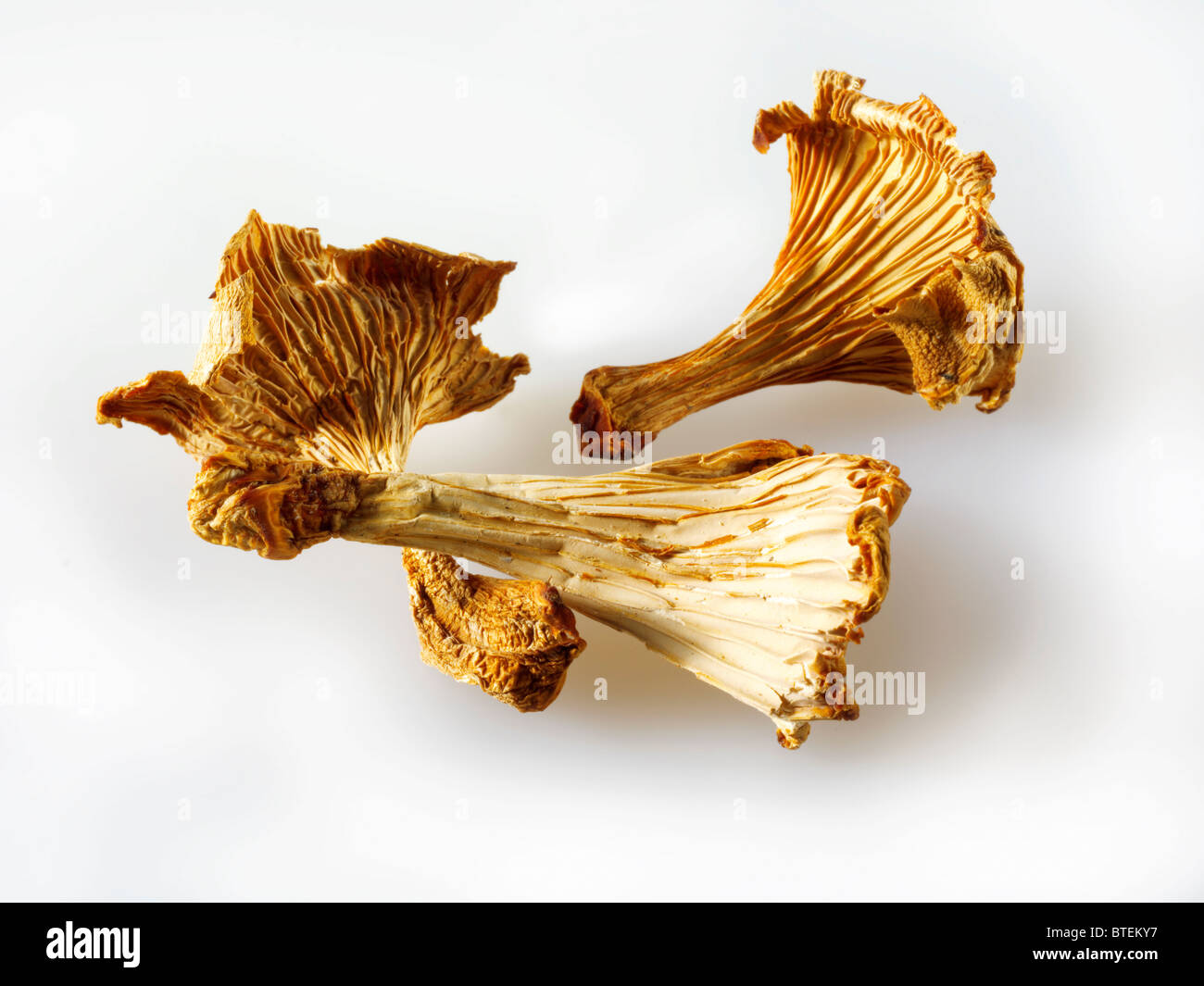 Dried Chanterelle mushrooms - Stock Image
