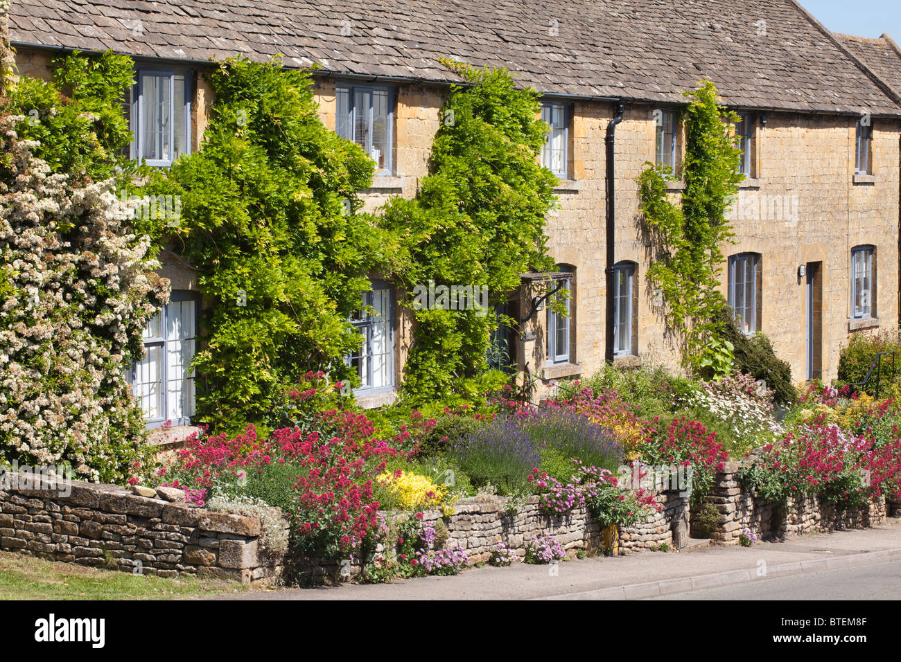 Summer flowers on cottage garden walls in the Cotswold village of Bourton on the Hill, Gloucestershire - Stock Image