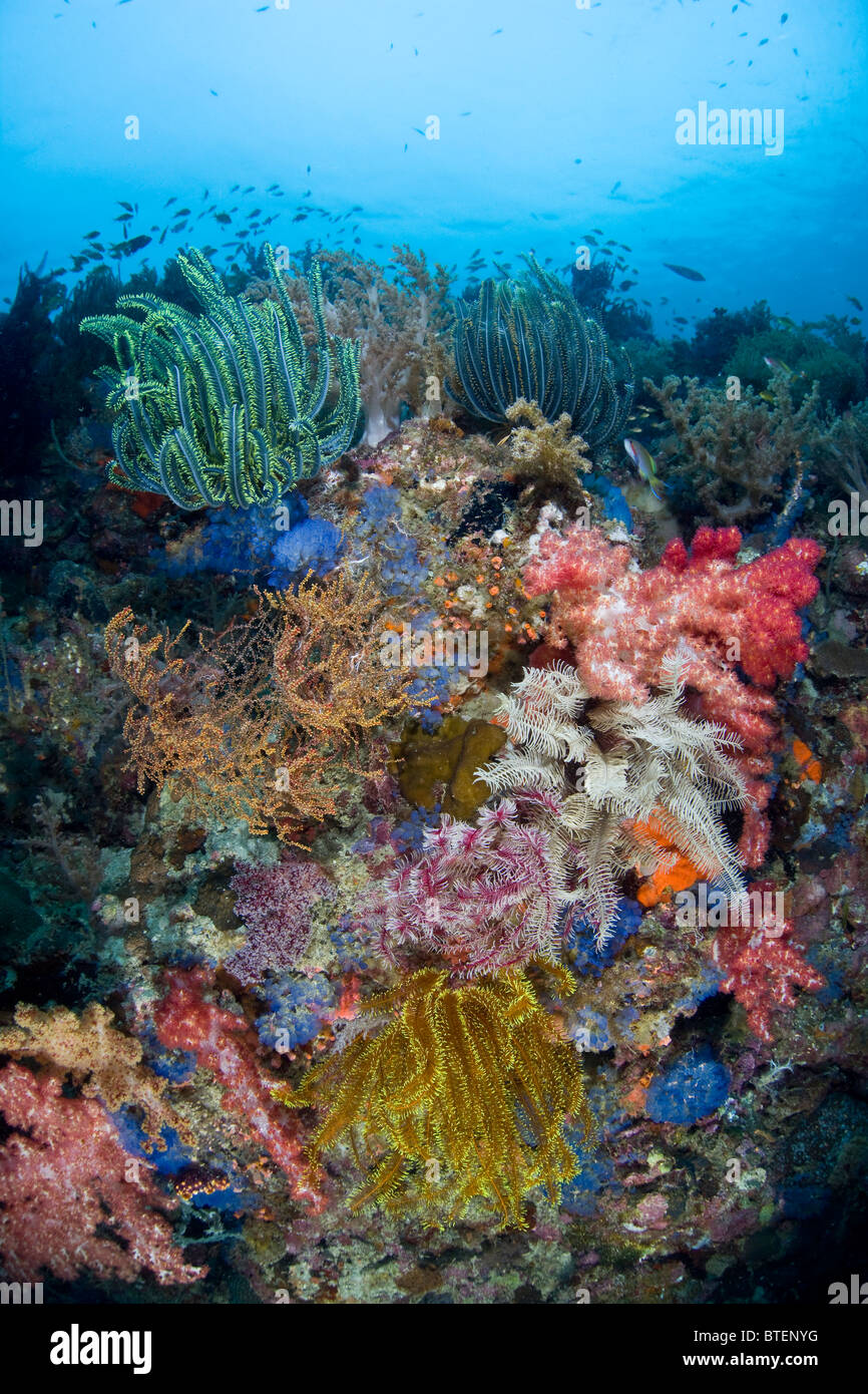 A cluster of colorful invertebrates fight for space and food along the diverse coral reef that surrounds Cabilao - Stock Image