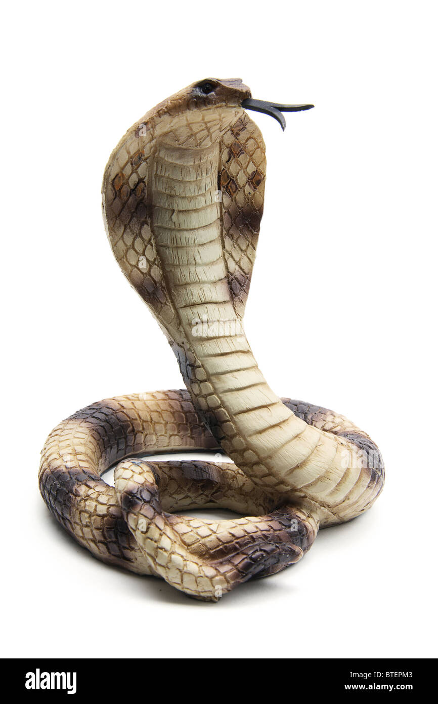 Cobra Attack Stock Photos & Cobra Attack Stock Images - Alamy