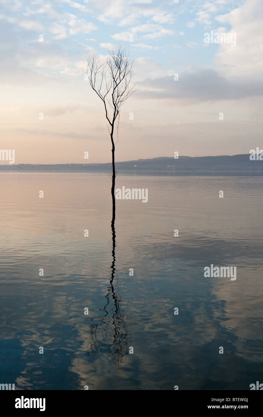 Dried tree in Sapanca lake shot in blue hour. - Stock Image