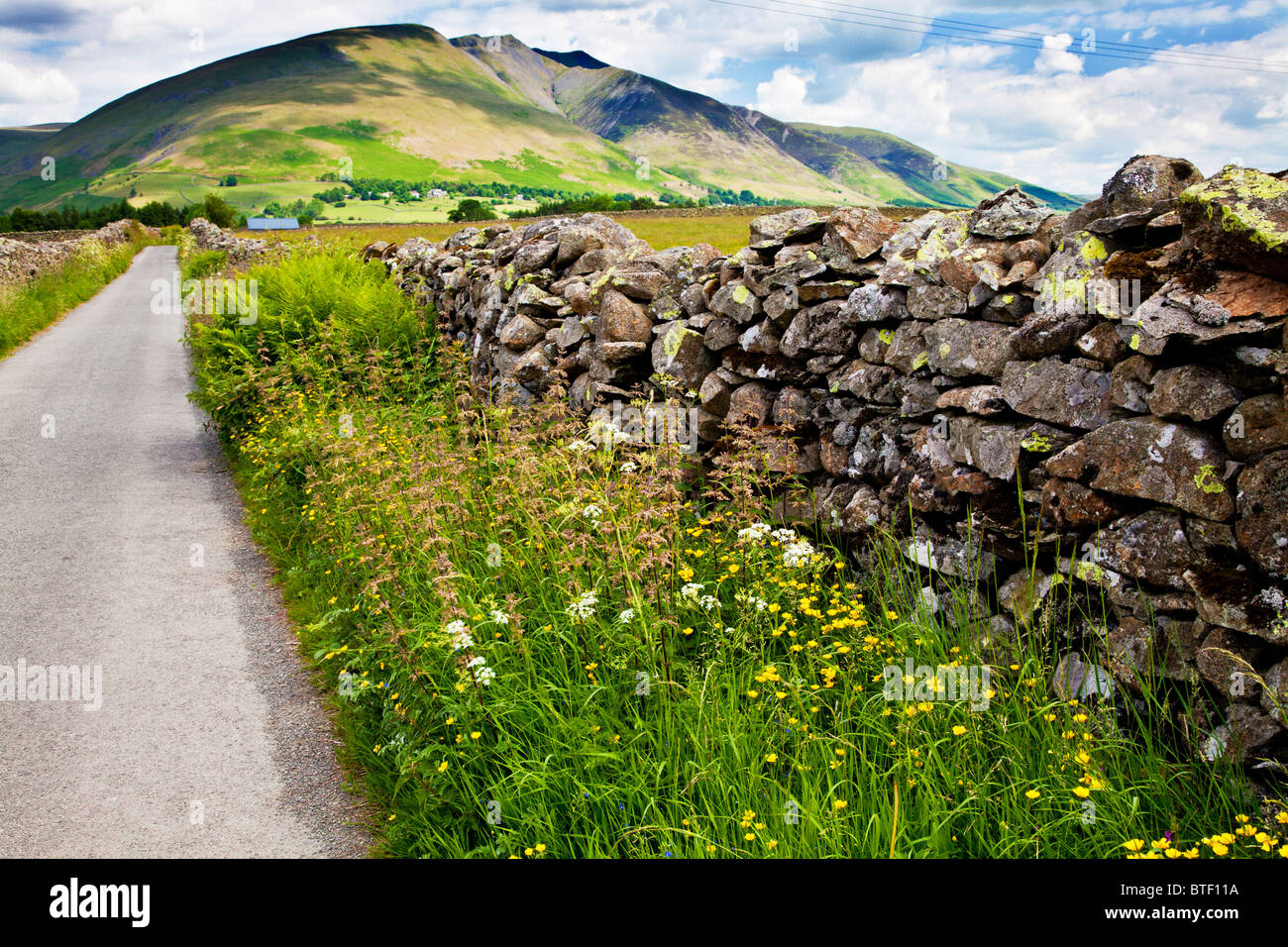 A dry stone wall and wildflowers near Castlerigg in the Lake District National Park, Cumbria, England, UK - Stock Image