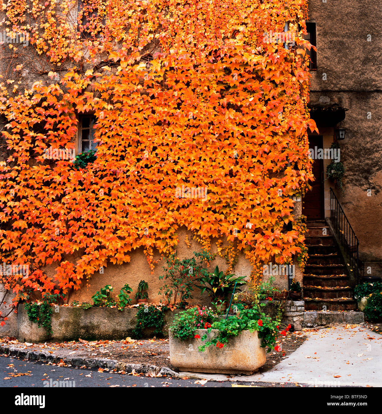front of a dwelling covered by vines with leaves and fall colors