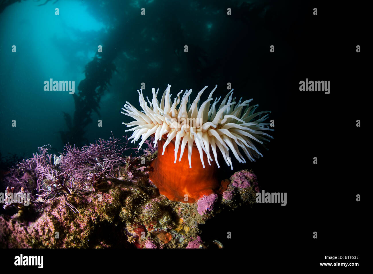 Though It Is A Carnivore An Anemone Looks Like Large Colorful Flower On