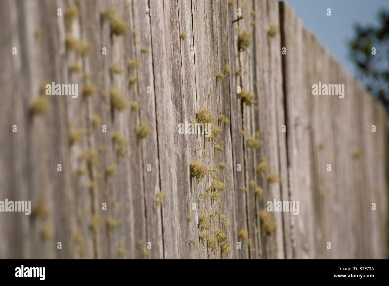 Mossy fence - Stock Image