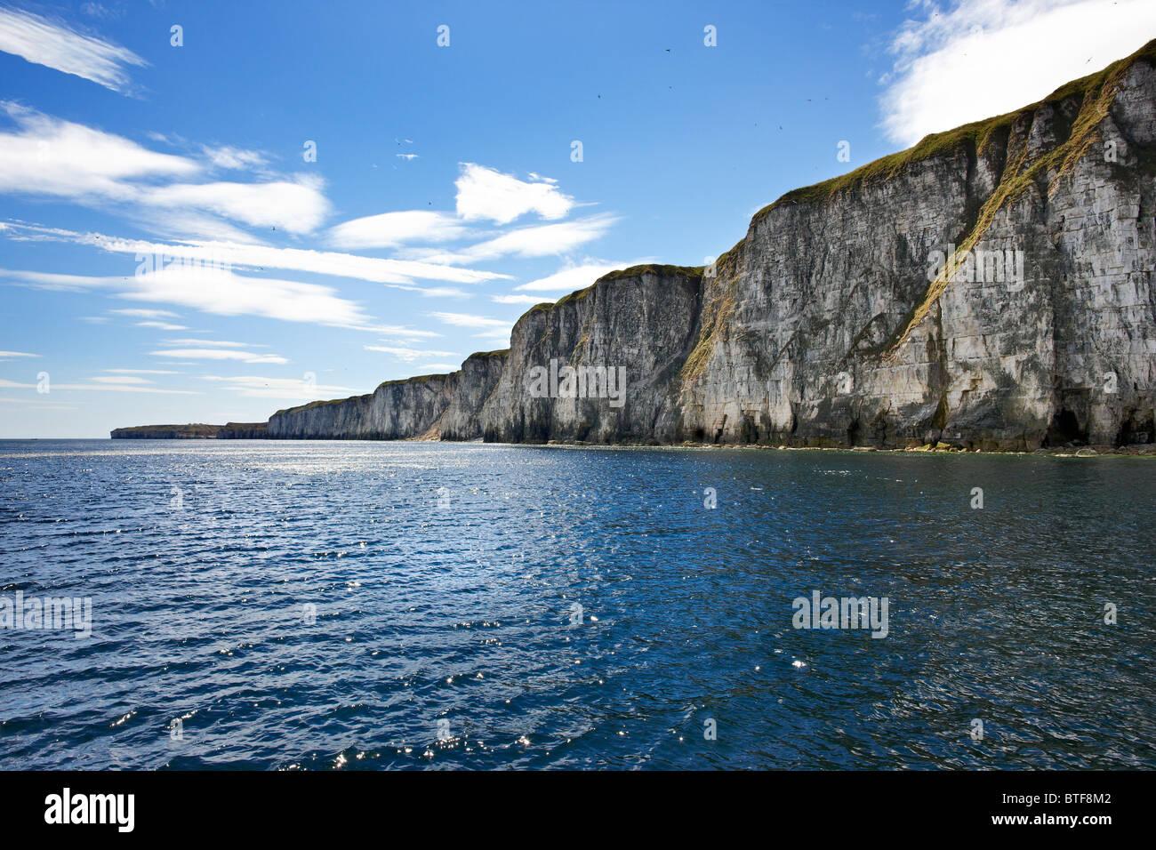 Chalk cliffs between Bempton and Flamborough, North Yorkshire coast. Summer. - Stock Image