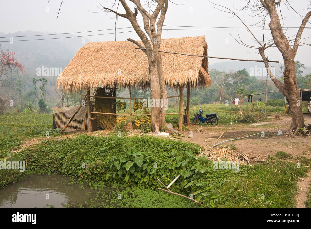 Palm thatch roof buildings at Patara Elephant Farm, an elephant rescue operation in the Chiang Mai area of Thailand - Stock Image