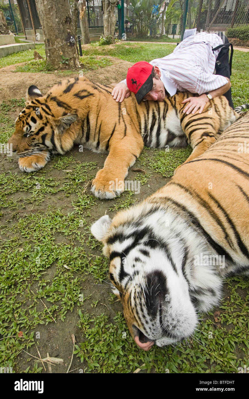 Visiting tourists hug, pet and scratch tigers under close supervision of trainers at Tiger Kingdom in Chiang Mai, - Stock Image