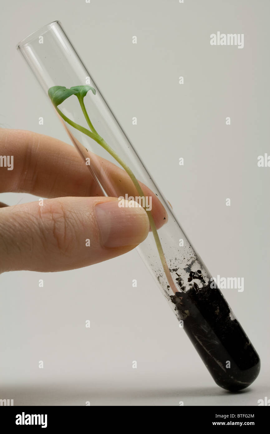 Radish Seed Sprouting in Test Tube - Stock Image