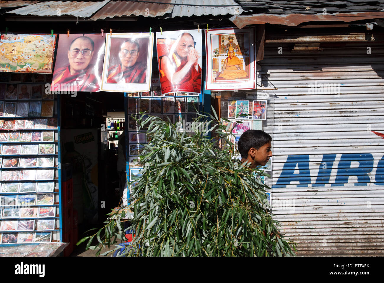 A boy carries a stack of tree branches in the street decorated with portraits of Dalai Lama of McLeod Ganj, India - Stock Image