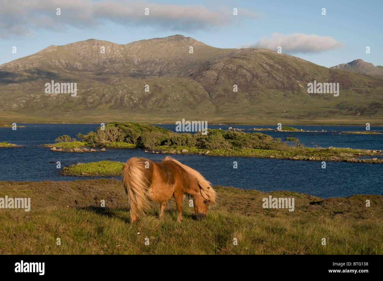 Loch Druidibeg South Uist, Outer Hebrides, Western Isles, Scotland. SCO 6962 - Stock Image