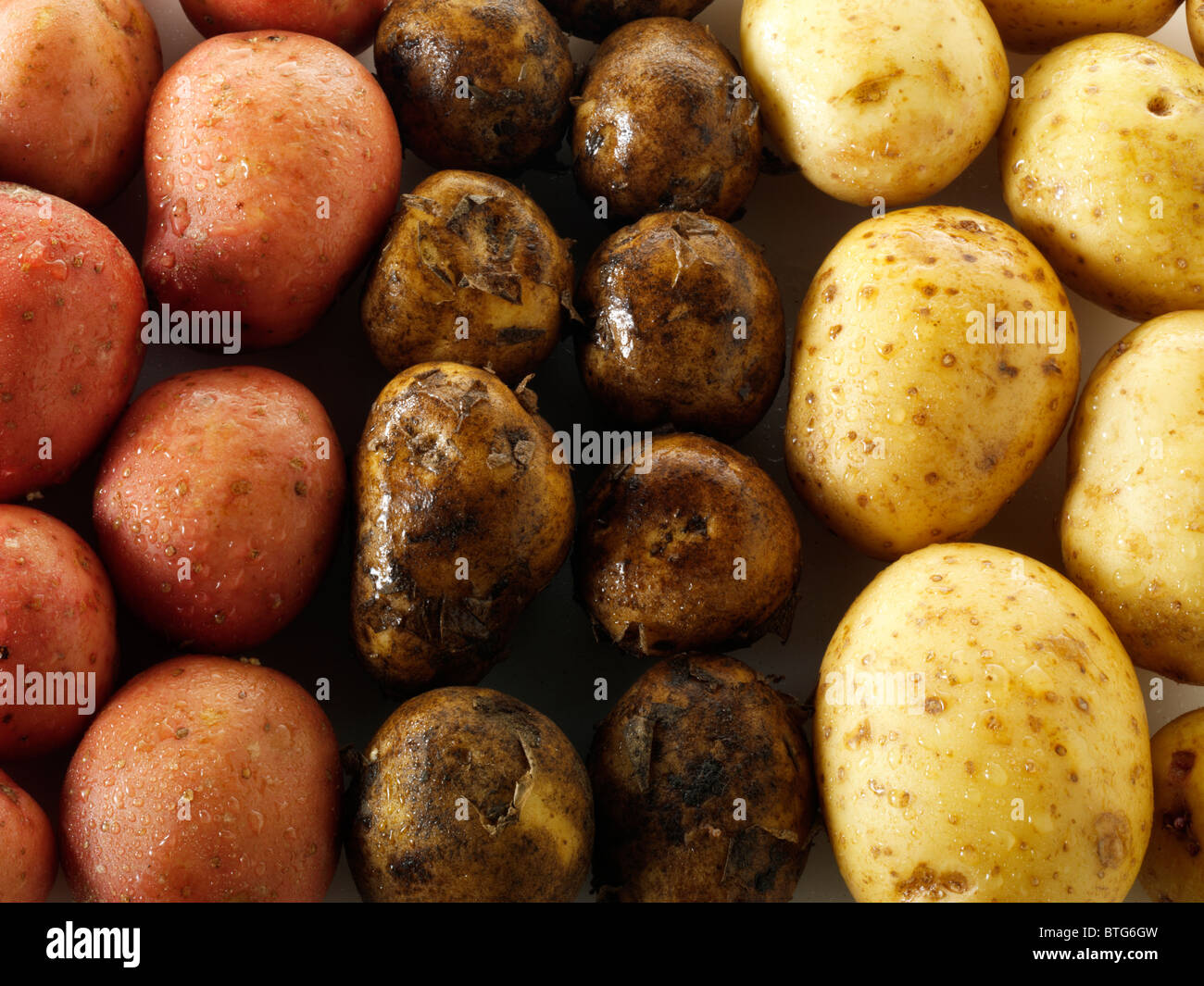 Mixed fresh un-cooked potatoes - Stock Image