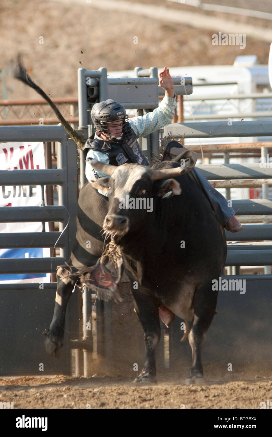 Cowboy Jake Wade competes in the Bull Riding event at the San Dimas Rodeo in San Dimas on October 2, 2010. - Stock Image
