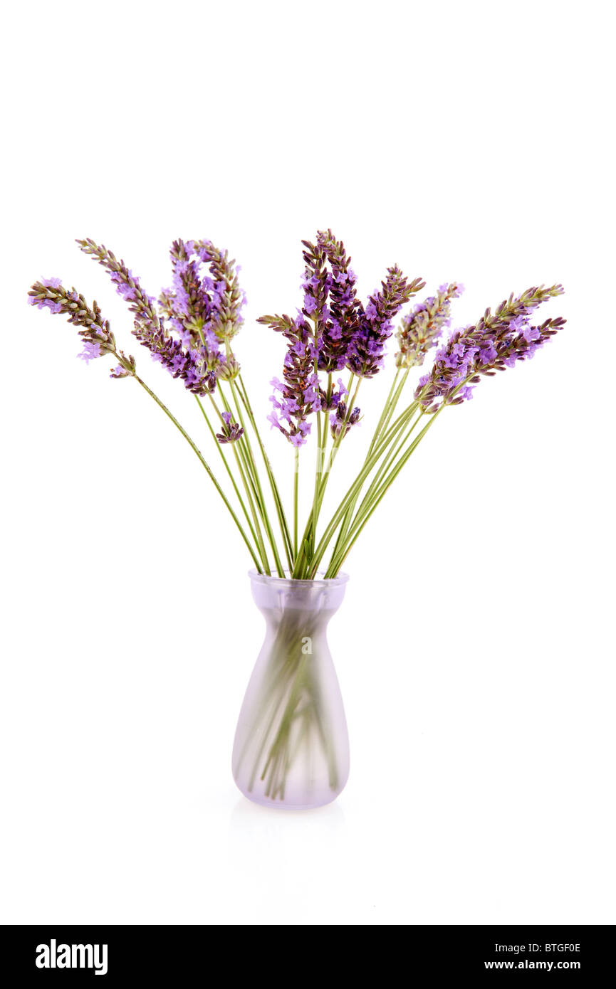 Little glass vase with purple Lavender isolated over white - Stock Image