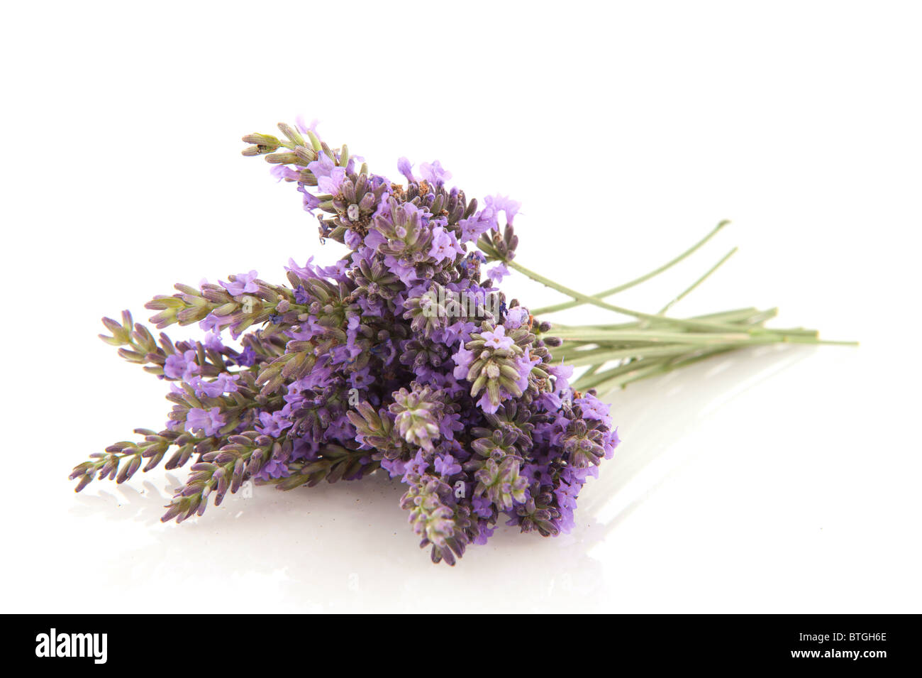 Bouquet purple Lavender flowers isolated over white - Stock Image