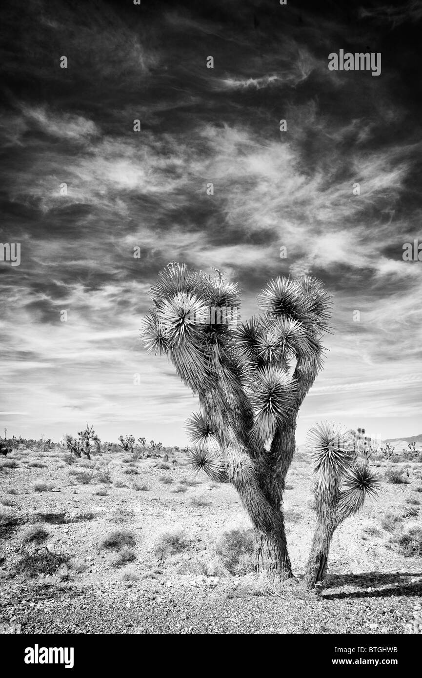 ** Cactus in Death Valley, California, USA Stock Photo