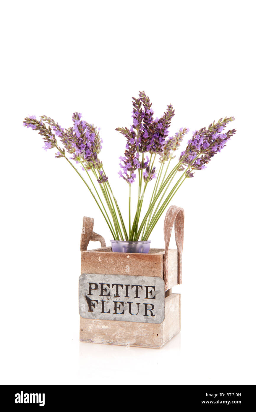 Little bouquet purple Lavender in wooden crate isolated over white - Stock Image