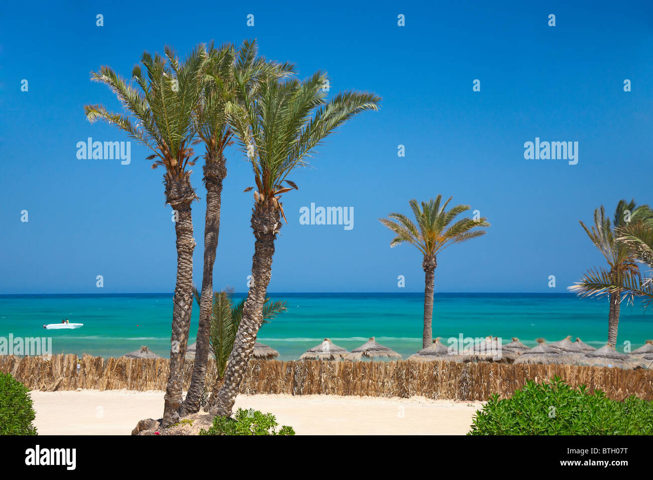 thatched sunshades and palm trees - Stock Image