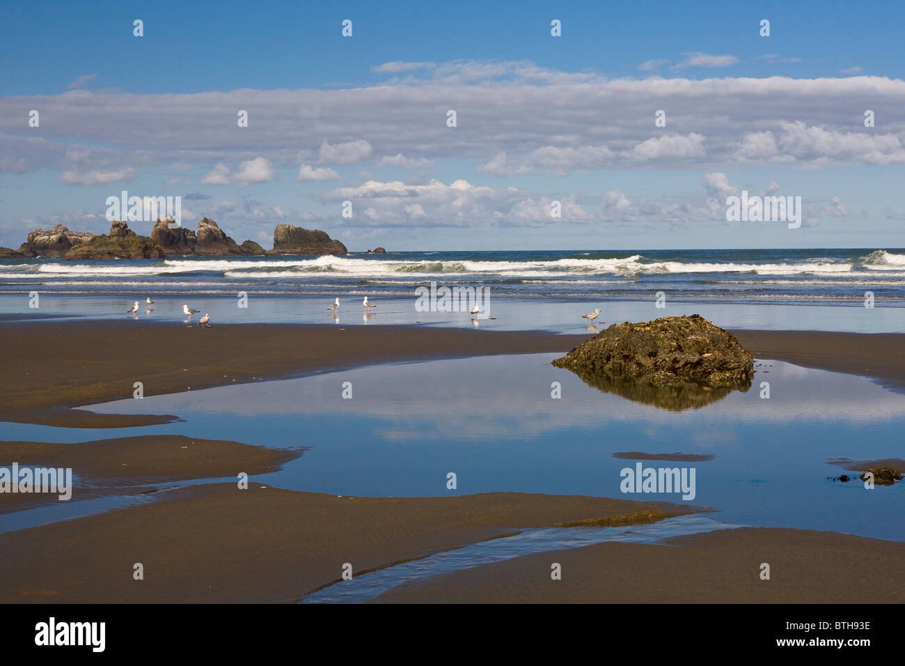 Bandon Beach Area - Traveller Reviews - Face Rock State