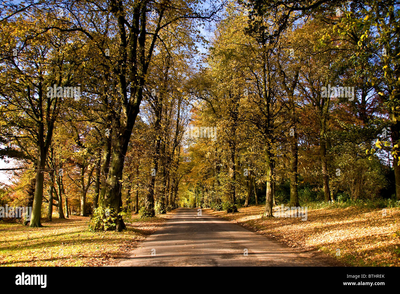 Avenue of trees in Autumn at the Camperdown Country Park main entrance in Dundee,UK Stock Photo