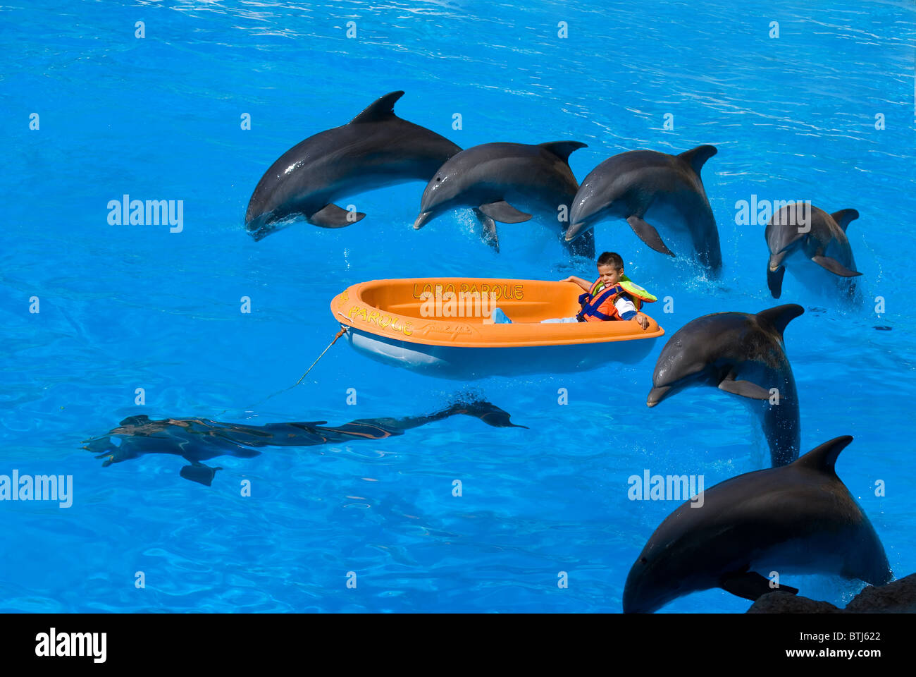 Children playing with dolphins - Stock Image