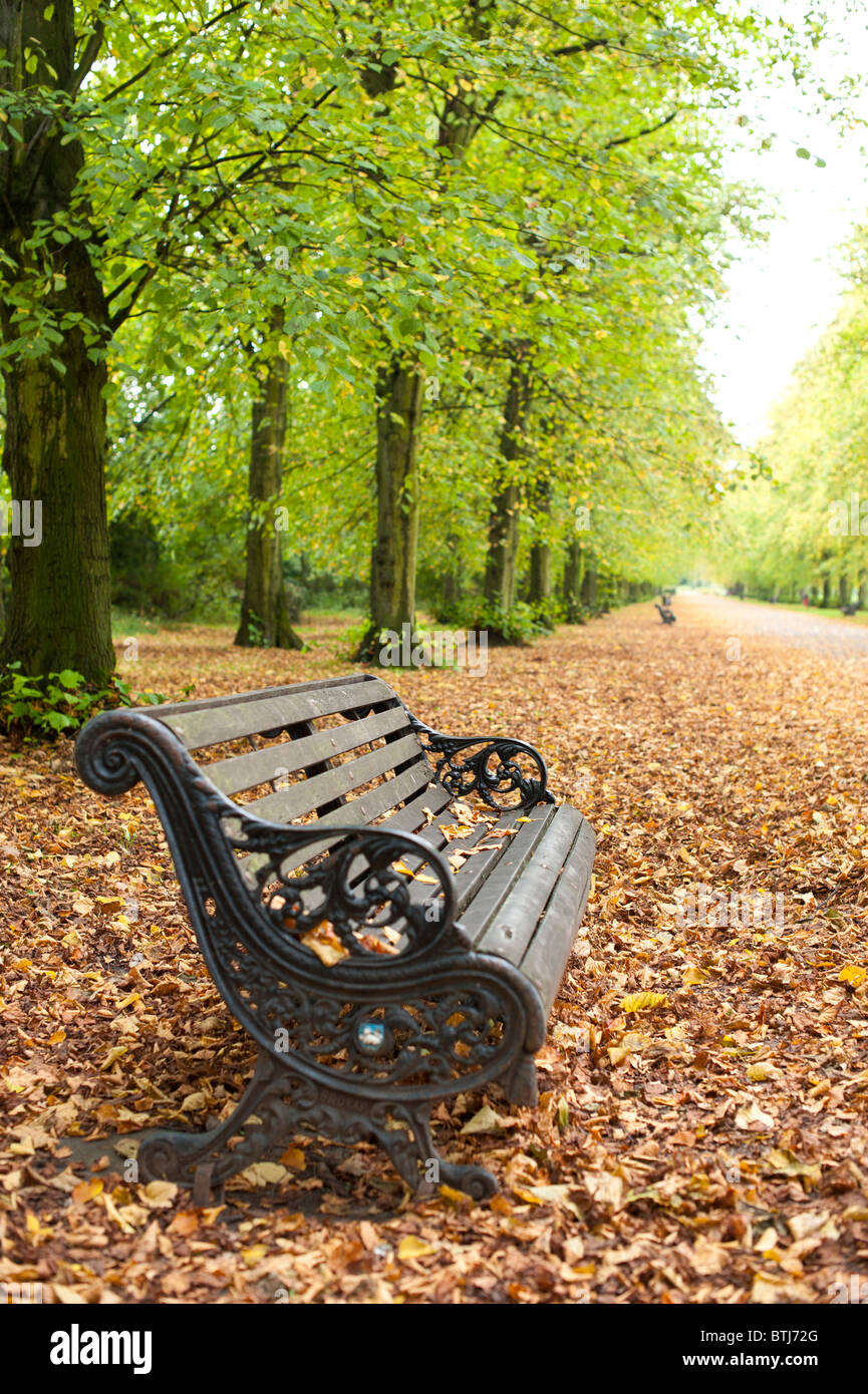 Park Bench in Autumn - Stock Image