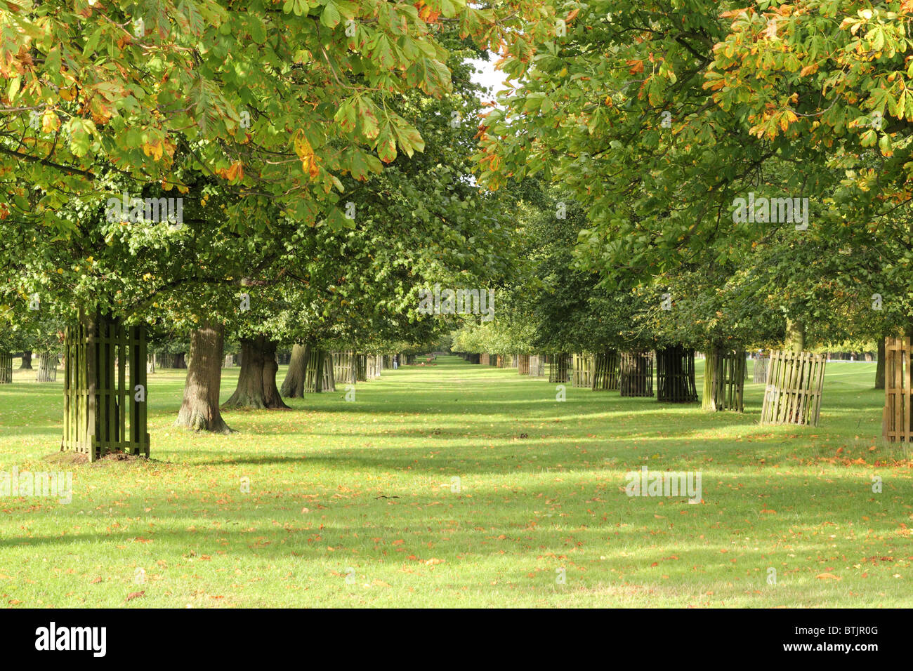 View of two straight rows of trees at Bushy Park, Surrey, England, UK Stock Photo