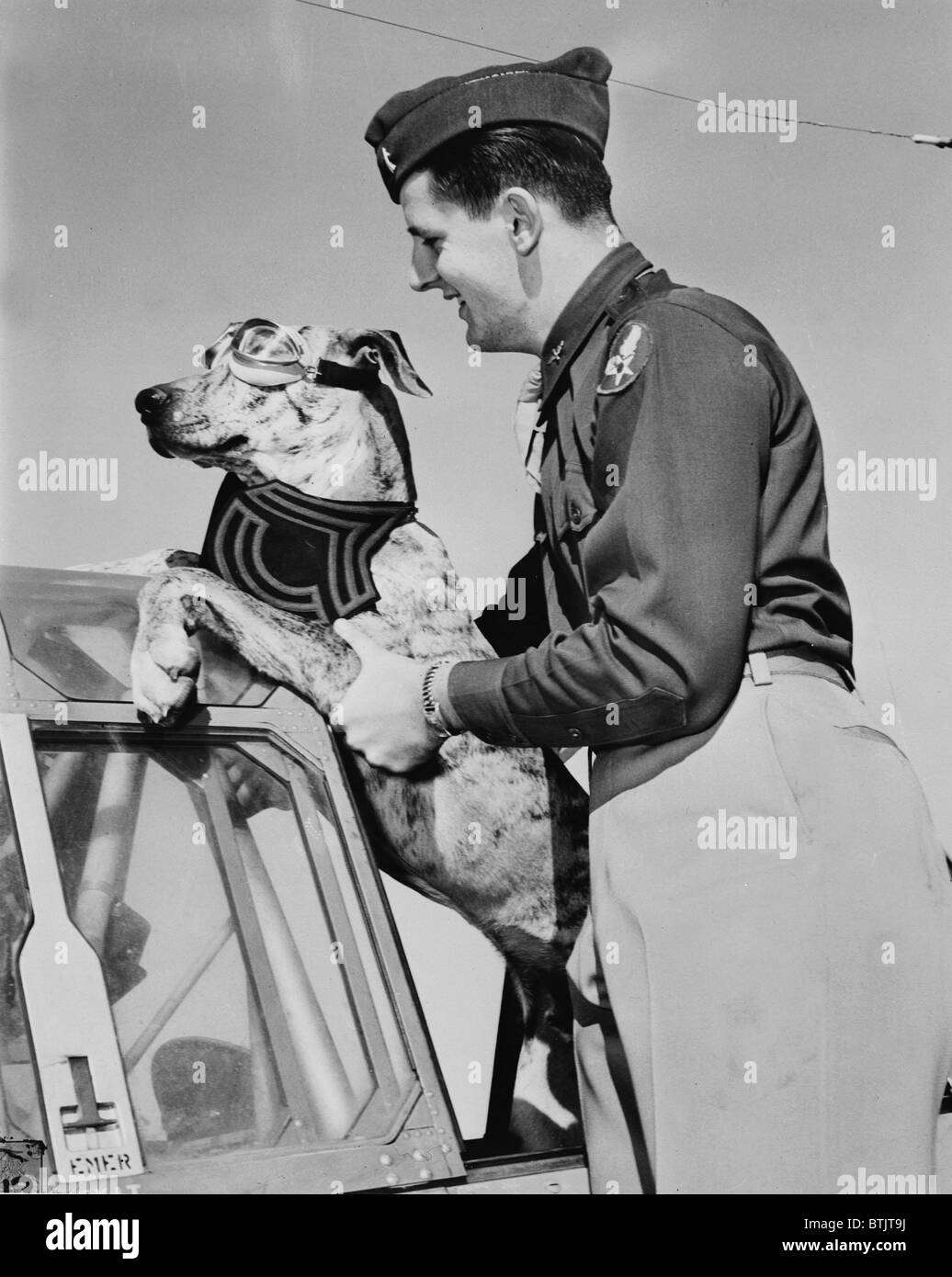 World War II, Tiger, a six-month old, 125 pound great dane earned his Sergeant's stripes by rousing a whole - Stock Image