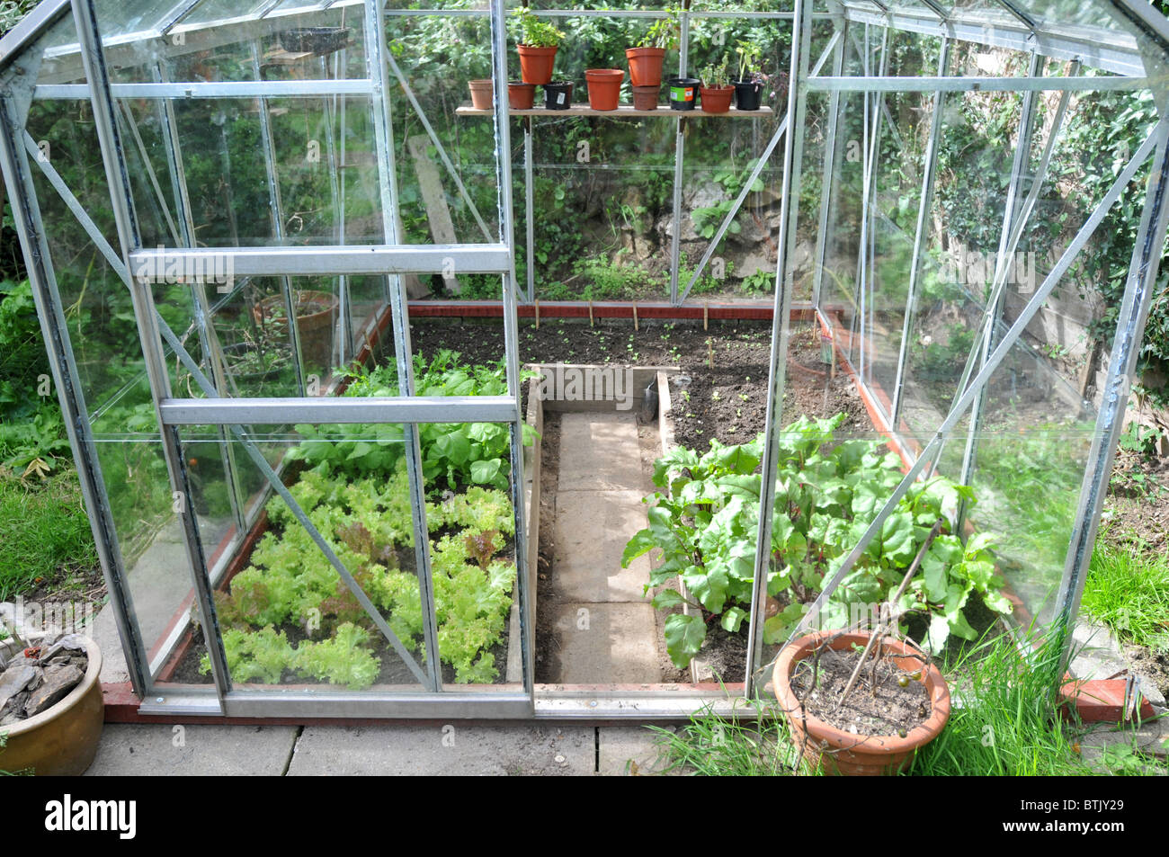Sensational A Greenhouse Growing Salad Leaves With Seedlings Growing In Download Free Architecture Designs Ogrambritishbridgeorg