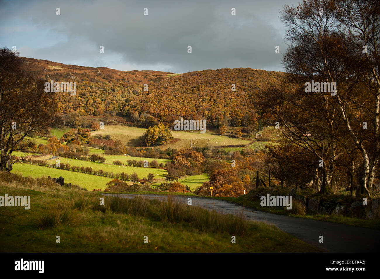 autumn afternoon, rural landscape, Cwm Marteg, near Rhayader, Powys mid wales uk - Stock Image