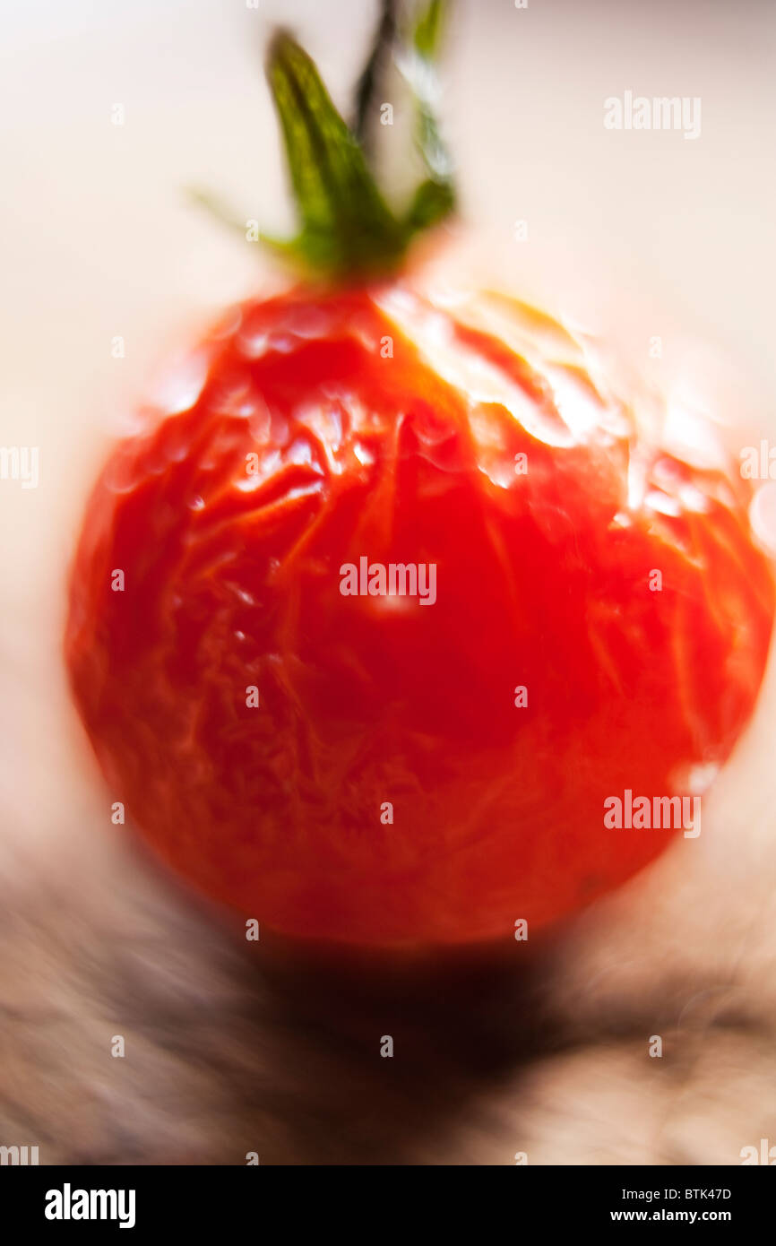 Ageing plum tomato, close-up - Stock Image